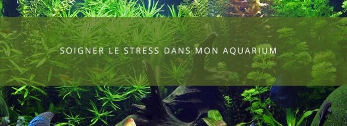 Lutter contre le stress  des poissons d'aquarium