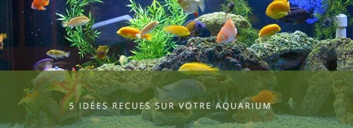 5 Idées reçues sur l'aquariophilie