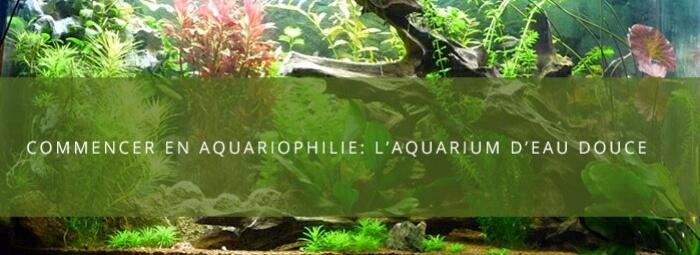 Débuter en aquariophilie : le montage d'un aquarium d'e