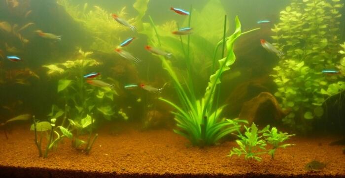 conseil entretien l 39 eau de mon aquarium est trouble et sent mauvais que faire. Black Bedroom Furniture Sets. Home Design Ideas