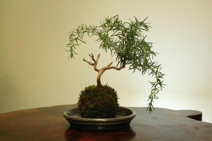 Kokedama, un art floral japonais qui séduit