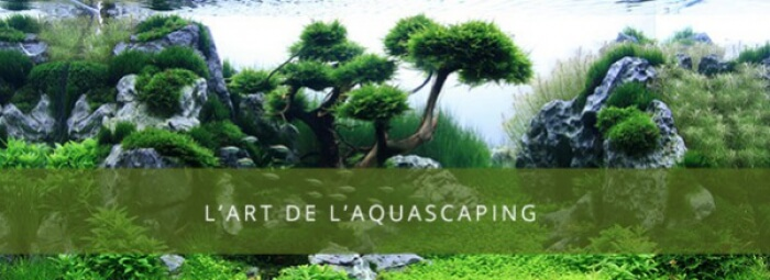 L'art de l'aquascaping